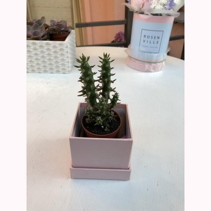 Мини- кактус