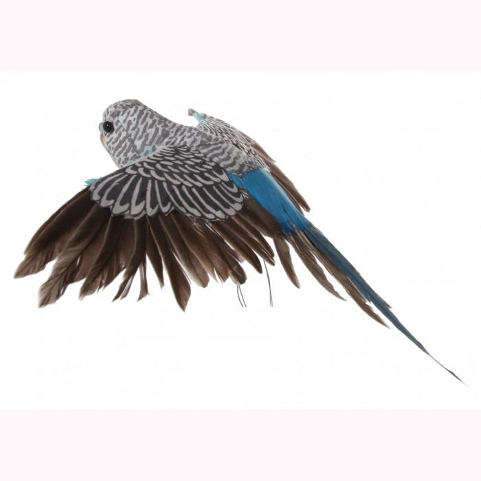 Bird blue feather flying 21cma25cm;b21cm