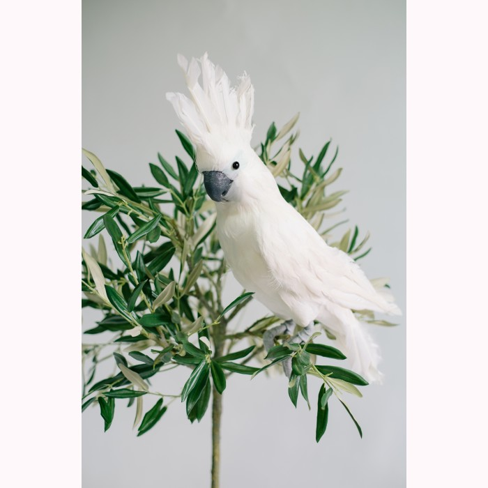 Parrot white feather 50cm