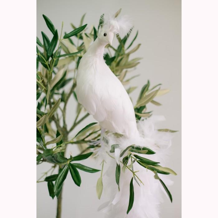 Peacock white 70cm