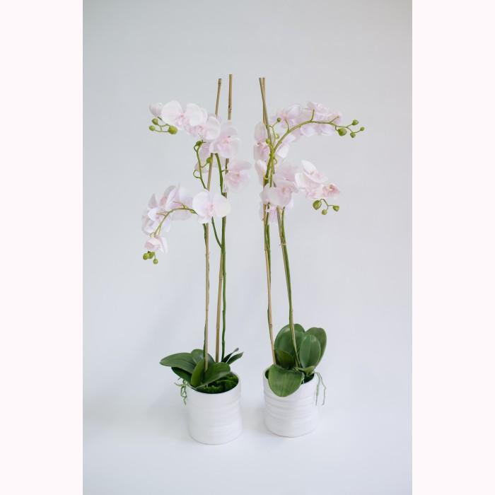 Phalaenopsis x2 potted pink h90cm