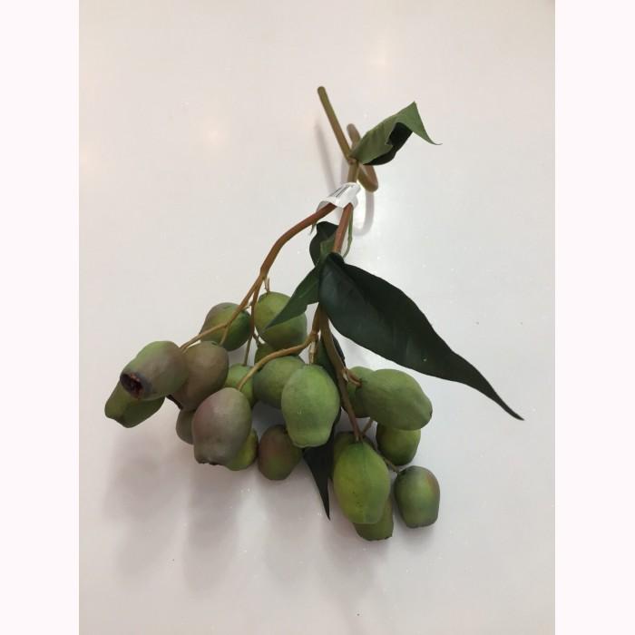 Eucalyptus seeds h48 gr